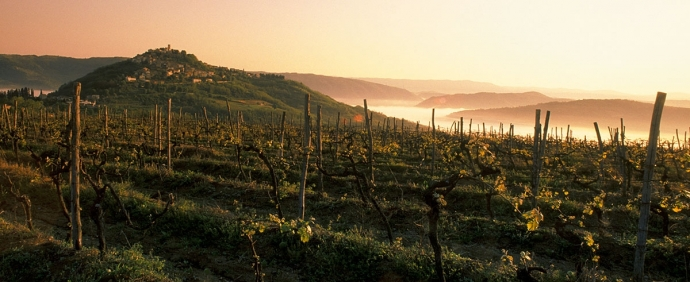Self-Guided Multi-Day Tour Through Istrian Wine Roads